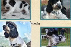 2016 Merlin de Montravel