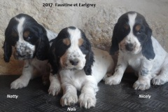 2017 FAUSTINE et EARLGREY