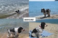 Mayline à la mer.
