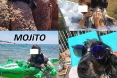Mojito en Corse