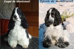 Esope et Epson de Montravel adultes