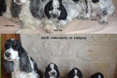 2016  Hello Ketty et Earlgrey