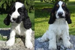 Chanel et Clovis